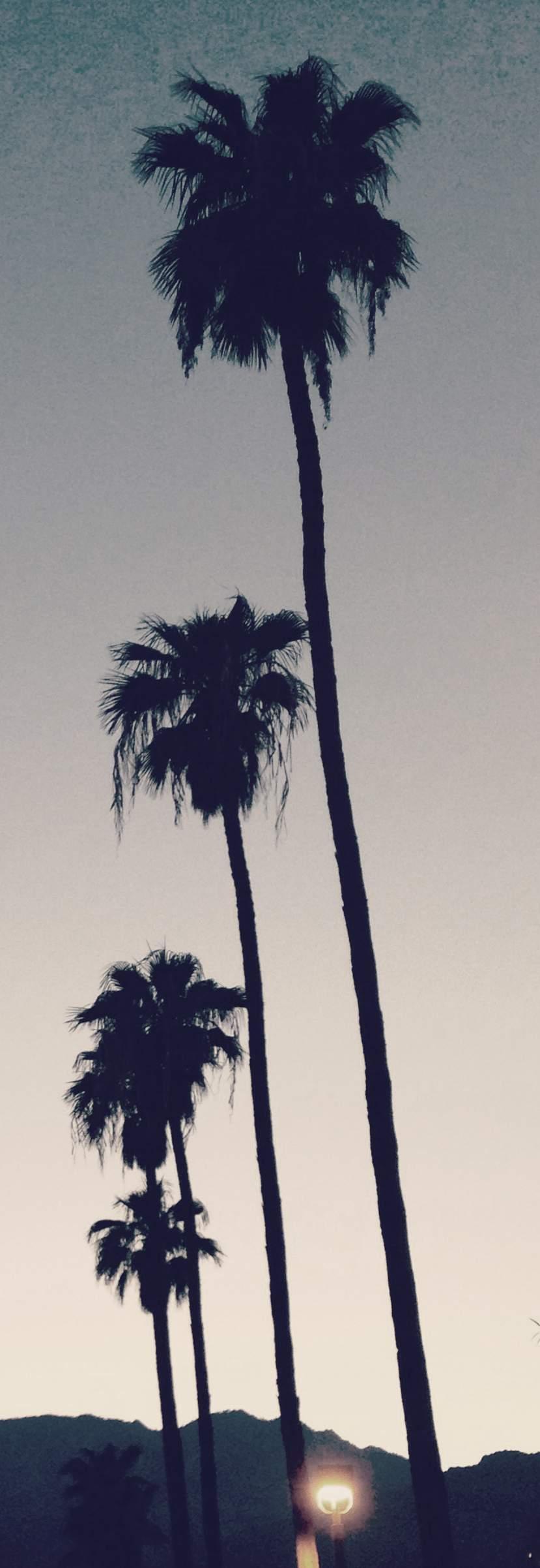 california-palm-trees-narrow